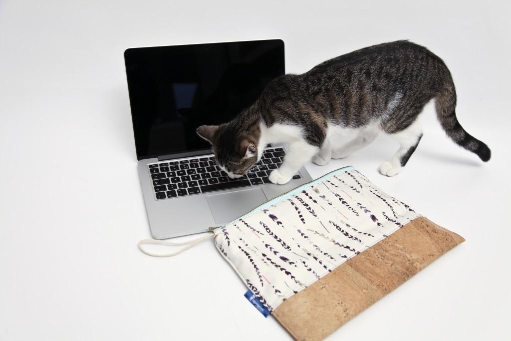 Sonny, the curious cat